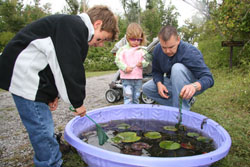 Explore the Lily Pond at Fall Festival
