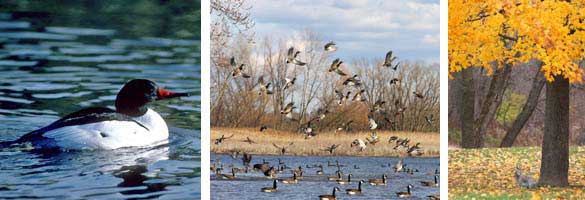 group of images showing waterfowl and a tree