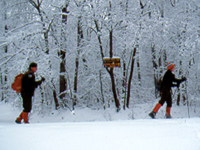 Cross-country skiers in Willowemoc Wild Forest