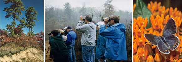 pine barrens, people with binoculars, karner blue