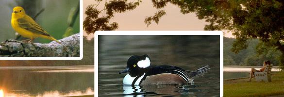 Belmont Lake State Park Nys Dept Of Environmental