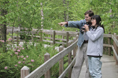 A couple on a raised boardwalk watching wildlife