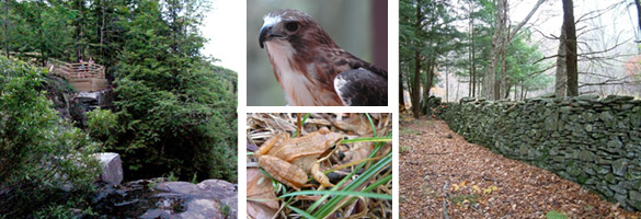 raptor, toad, scenic photos