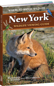 wildlife viewing guide cover with fox