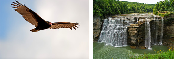 bird soaring, view of waterfall