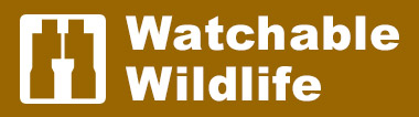 watchable wildlife logo