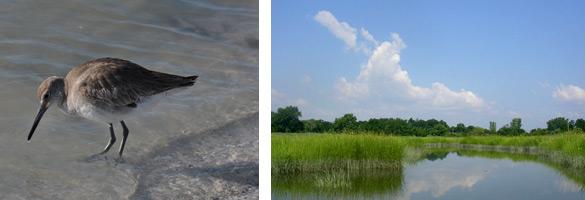 Long Island National Wildlife Refuge Complex Nys Dept