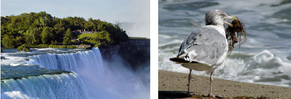 view of falls and gull on beach