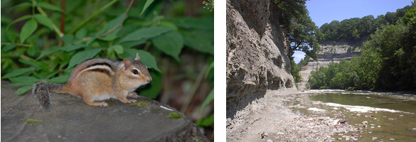 chipmunk, gorge