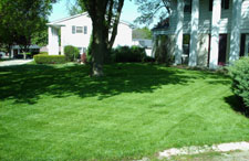 A residential front lawn