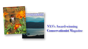 link to the Conservationist magazine