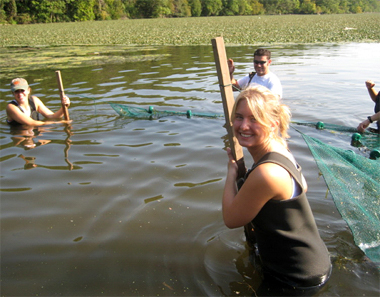 Seining for fish in the cove adjacent to the Norrie Point Environmental Center. The seine net is being dragged along by three people in chest waders. In the background the surface of the water is covered by invasive Eurasian water chestnuts.