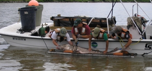 Staff of the Hudson River Fisheries Unit processing an Atlantic sturgeon