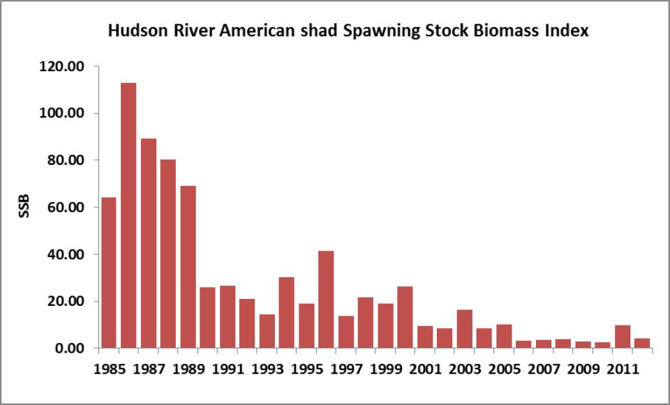 graph for Hudson River American shad spawning biomass from 1985 to 2008
