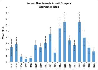 Graph of Hudson River Atlantic Sturgeon Abundance Index