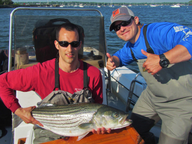DEC staff tagging a Striped bass in Long Island Sound