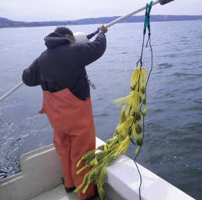 A staff deploying a biotoxin Monitoring bouy into the sea