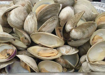 Steamed Hard Clams