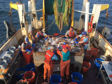 people sorting fish aboard a vessel
