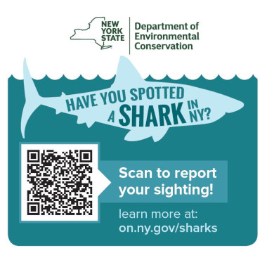 Coastal Sharks - NYS Dept  of Environmental Conservation