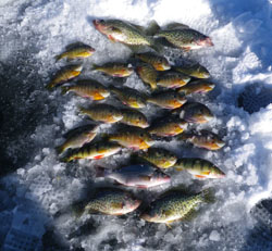 Ice fishing for panfish can be very productive in East Branch Reservoir