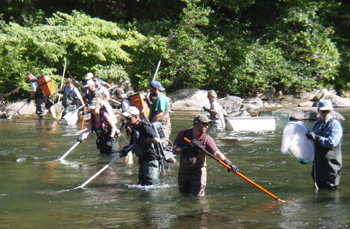 9 person crew conducing an electrofishing survey on Esopus Creek