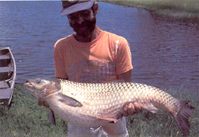 image of large grass carp