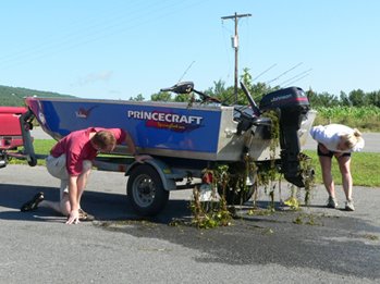 Inspecting a boat for invasive species