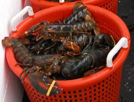a bushel of lobsters