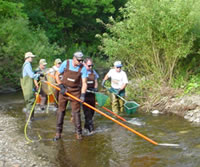 Electrofishing sampling of Mansfield Creek