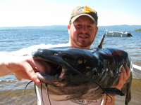 A Great Sacandaga Lake channel catfish.