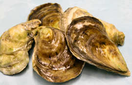 a bunch of oysters