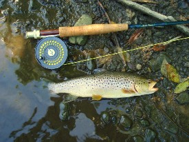 Fishing for stream trout nys dept of environmental for Trout fishing ny
