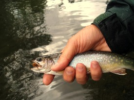 Photo of angler's hand holding brook trout