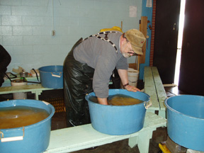 image of hatchery worker stirring walleye eggs