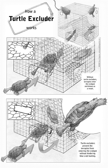 How a Turtle Excluder works