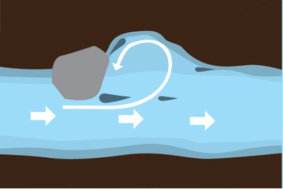 Graphic of fish positioned in a stream eddy.