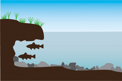 Graphic of fish positioned under an undercut bank.