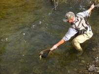 Wiscoy Creek angler landing a wild brown trout.