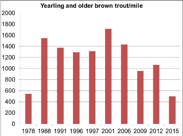 Graph showing average abundance (number per mile) for all sites for yearling and older wild brown trout captured in Wiscoy Creek, from electrofishing sampling in 1978-2015.