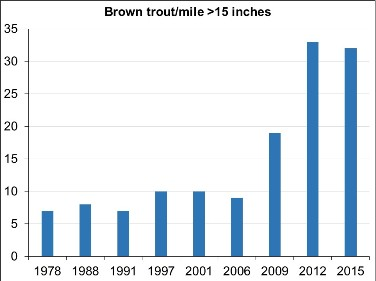 Graph showing abundance (number per mile) of wild brown trout greater than 15 inches captured in Wiscoy Creek, from electrofishing sampling in 1978-2015.