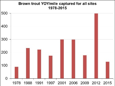 Graph showing numbers of young-of-year wild brown trout captured per mile at Wiscoy Creek sites, from electrofishing sampling in 1978-2015.