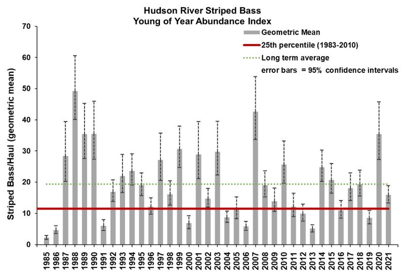 young of year abundance of stribed bass in the hudson river estuary