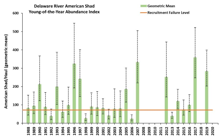 Large image of the graph showing young of year catch rates of American shad in the Delaware River