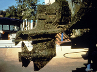 Image of a zebra mussel encrusted outboard motor.