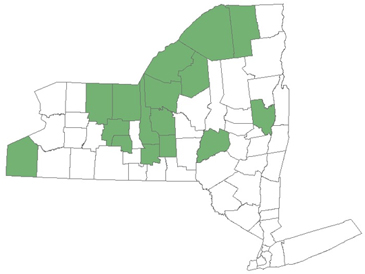 NYS counties in which starry stonewort has been identified