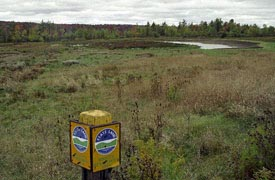 photo of a marshland bird habitat at Alder Bottom Wildlife Management Area in Chautauqua County