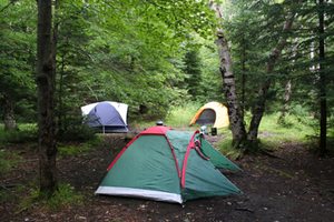 tents setup in primitive campsite