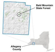 Bald Mountain State Forest locator map