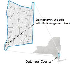Baxtertown Woods locator map